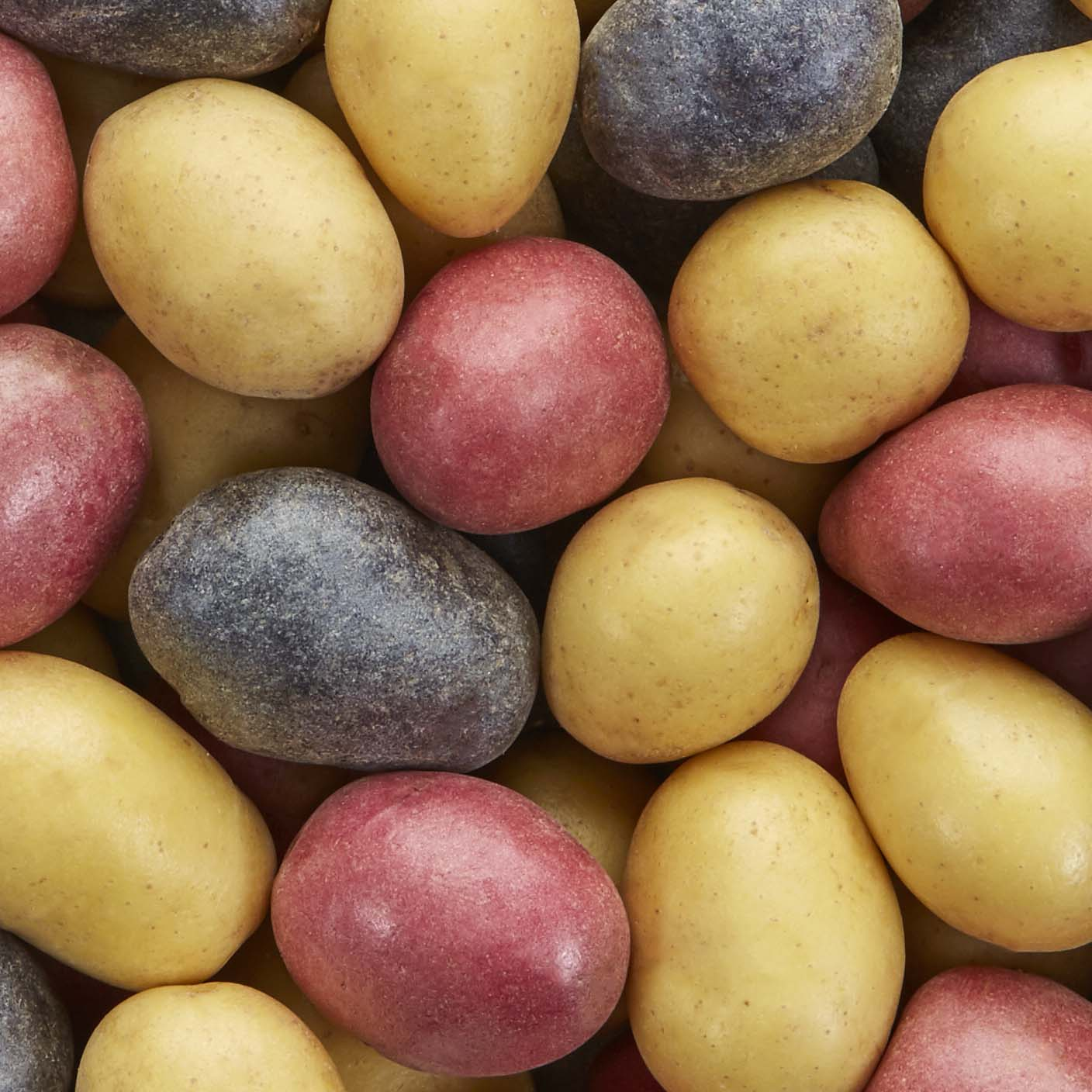 Bite-size potatoes for Thanksgiving