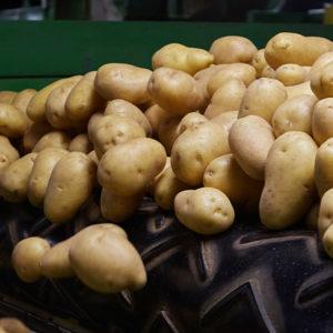 A buttery, sweet, yellow potato education