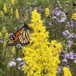 Read more about the article The future of pollinators is the future of food.